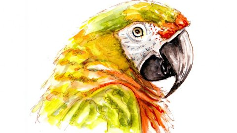 Day 19 - Parrot Watercolor Talk Like A Pirate Day - Doodlewash