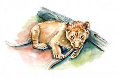 Day 4 - National Wildlife Day Lion Cub Watercolor - Doodlewash