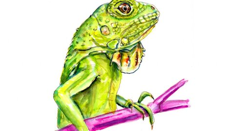 Day 8 - Iguana Awareness Day Watercolor - Doodlewash