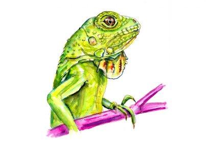 Day 8 - Iguana Awareness Day Watercolor - Doodlewash