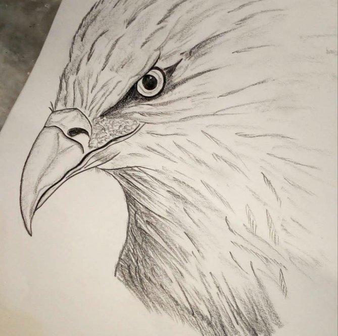 Eagle Sketch by Sonia Dutta - Doodlewash
