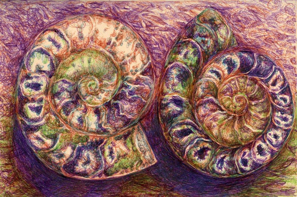 Cappuccino Book Seashells Illustration by Sandra Strait - Doodlewash
