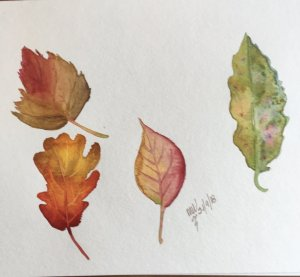This time more autumnal leaves and more fun and learning. Sorry, they are a bit blurred, had the cam