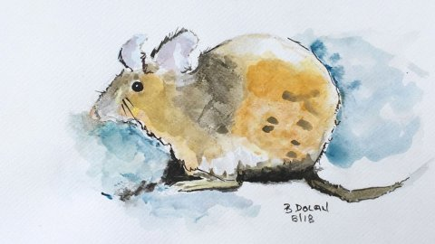 Mouse Watercolor by Bernadette Tully Dolan - Doodlewash