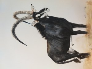My first watercolour Sable Antelope 20181018_115159