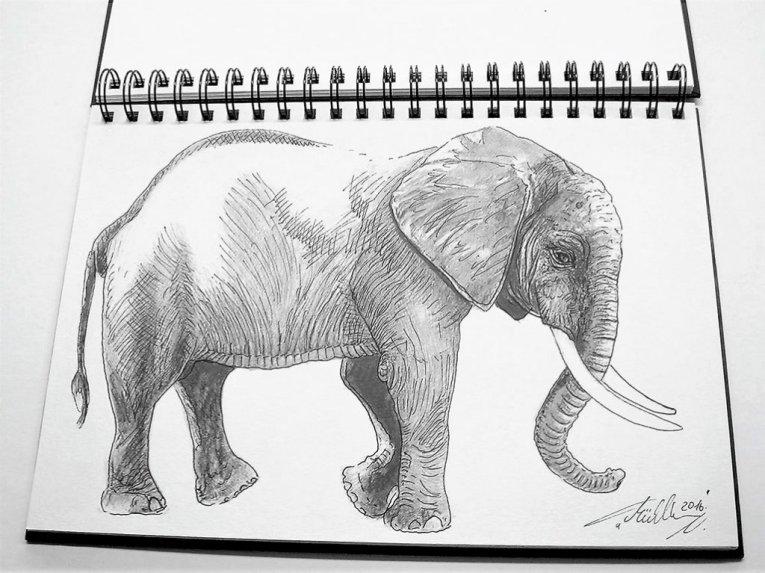 Elephant Sketch by Thomas Mühlbauer - Doodlewash