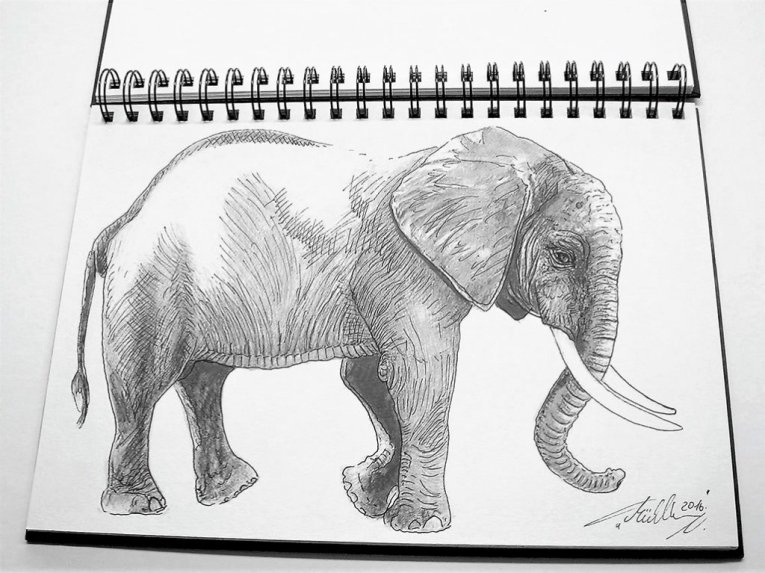 Elephant Sketch by Thomas Mühlbauer - Doodlewash