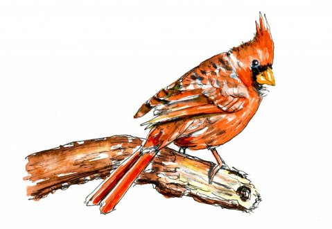 Day 13 - Autumn Cardinal Redbird Watercolor - Doodlewash