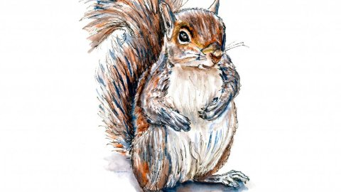 Day 16 - Squirrel Watercolor Inktober Drawing - Doodlewash