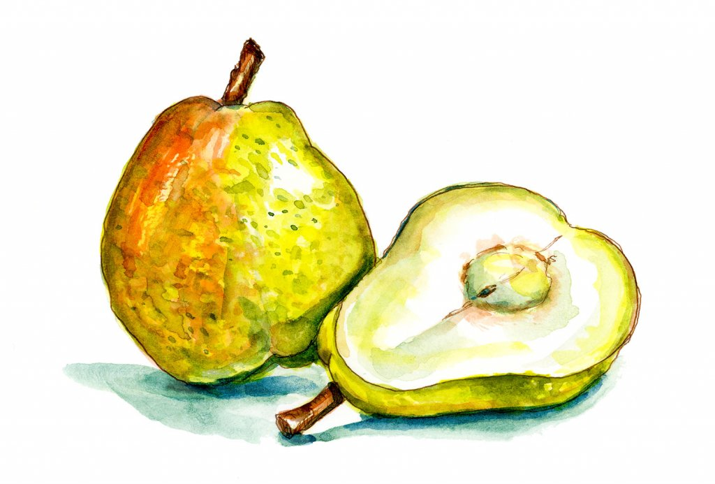 Day 17 - Pears Watercolor Painting - Doodlewash
