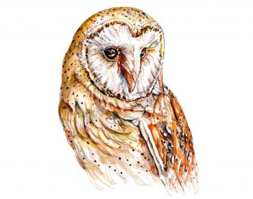 Day 19 - Barn Owl Watercolor Painting_