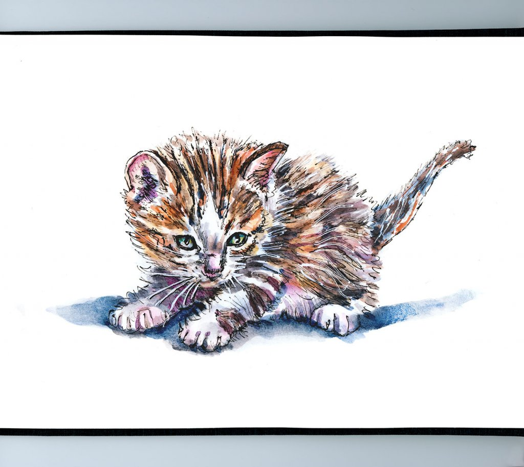 Day 20 - Kitten Inktober Watercolor - Doodlewash