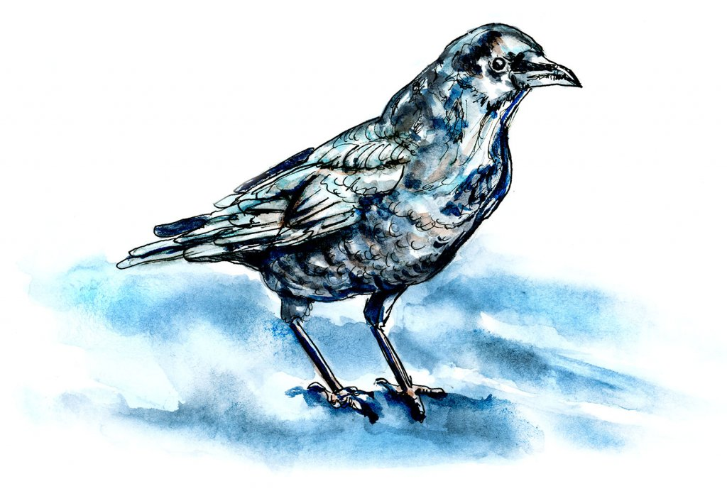 Inktober Watercolor - Day 21 - A Raven In The Night Moonlight - Doodlewash