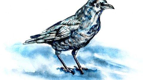 Inktober Watercolor - Day 21 - A Raven In The Night Moonlight - Doodlewash