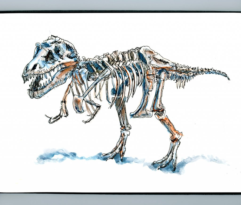 Day 25 - Sue Dinosaur Chicago Sketch Illustration T-Rex Detail - Doodlewash