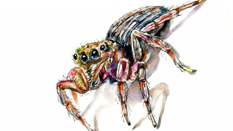 Day 26 - Jumping Spider Inktober Watercolor - Doodlewash