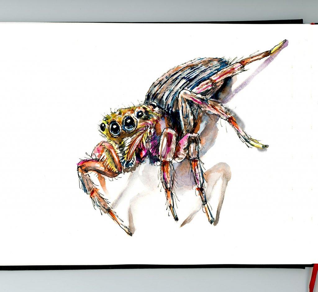Day 26 - Jumping Spider Inktober Watercolor Instagram - Doodlewash