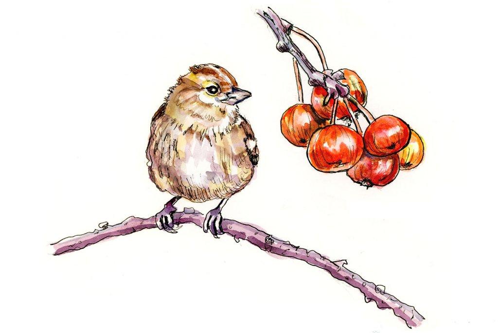 Day 7 - Bird And Berries Watercolor Ink Inktober - Doodlewash