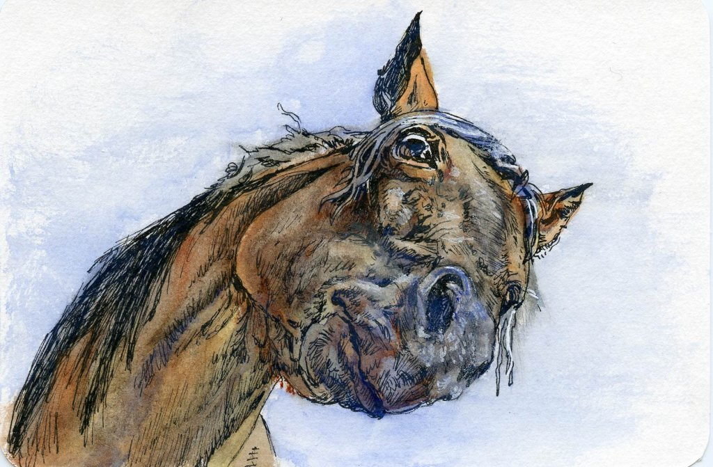 Did you know that the Horse has the largest eyes of any land mammal? If you are weak they will use t