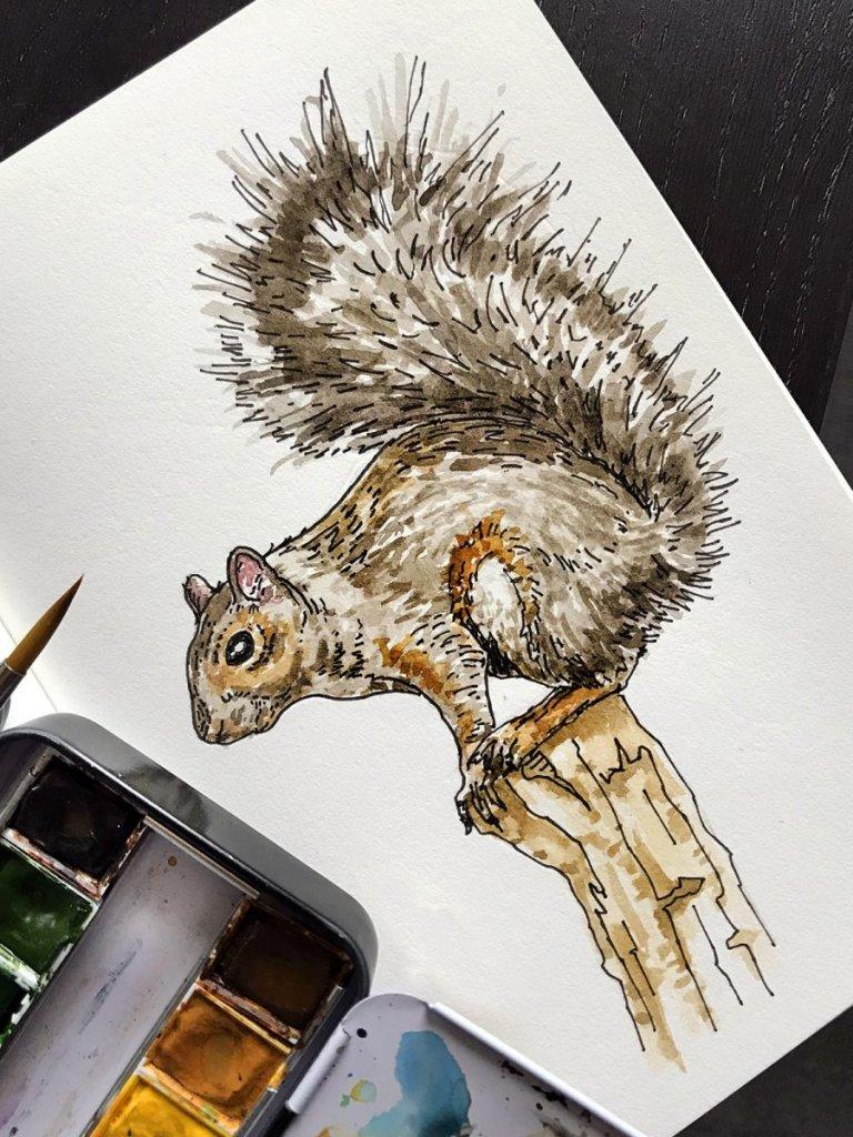 Squirrel IMG_2162a