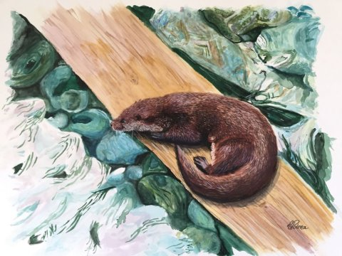 Watercolor Otter Painting by Claudia Polena - Doodlewash
