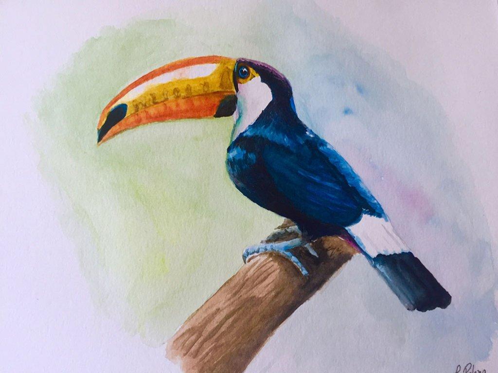 Watercolor Toucan Painting by Claudia Polena - Doodlewash