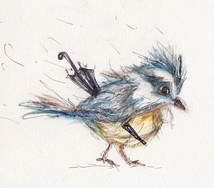 Birds. 3F9FEEB4-7027-4A96-A5CD-FE35F1C295781F22EF45-E265-455B-BF5E-96BA09B85929548271F9-BB4C-4FF3-B9