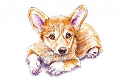 Day 14 - Corgi Puppy Watercolor Pet Portrait - Doodlewash