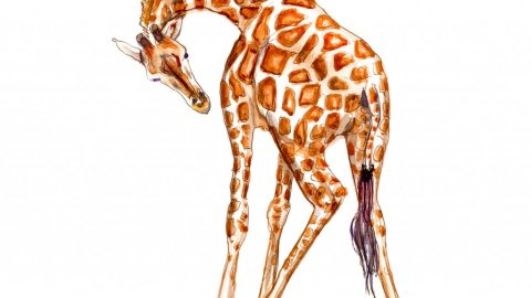 Day 16 - Giraffe Watercolor Full Body Sketchbook - Doodlewash
