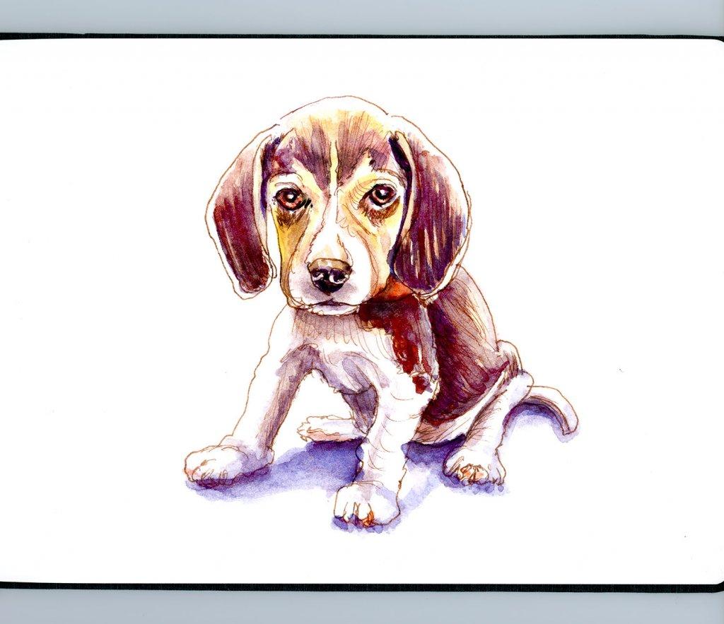 Day 4 - Beagle Watercolor Illustration Furry Friend Detail - Doodlewash