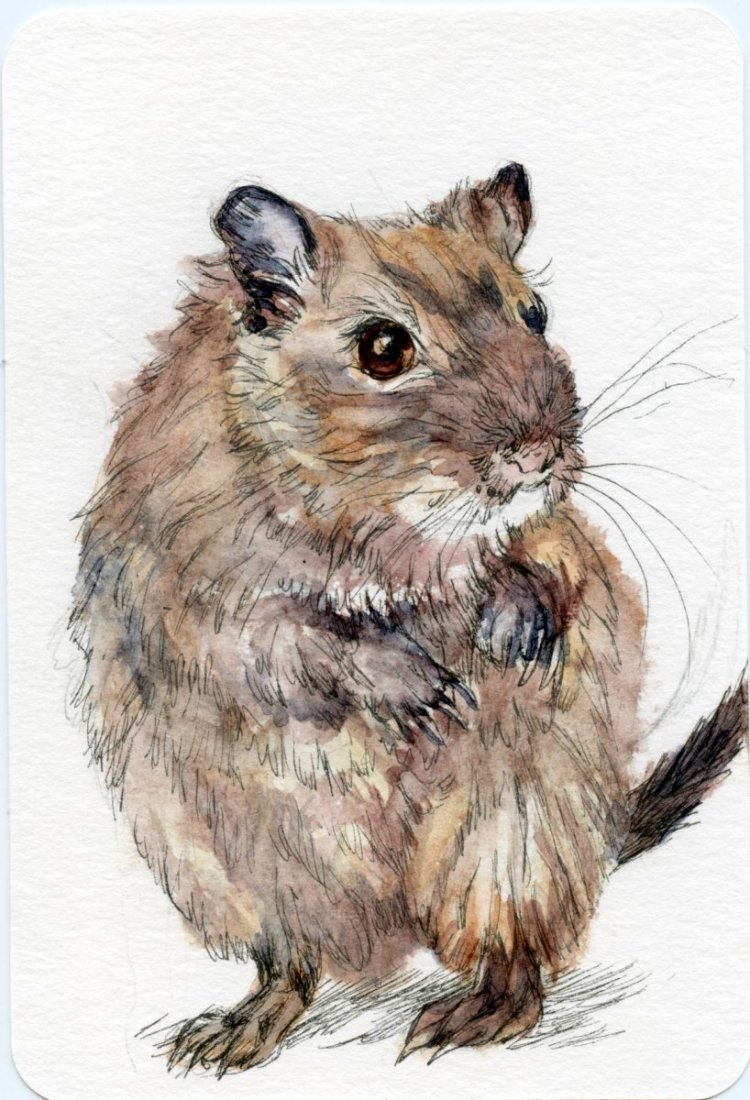 #PostcardsForTheLunchBag – Did you know that even though the Gerbil is a rodent, they are a di