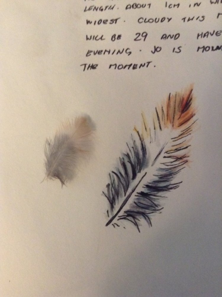 Little Feather. We found this outside while we were just sitting and watching all the comings and go