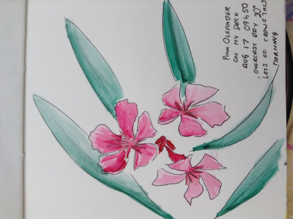 Oleander. We recently acquired this plant. I had no idea about the possible deadliness and its affec