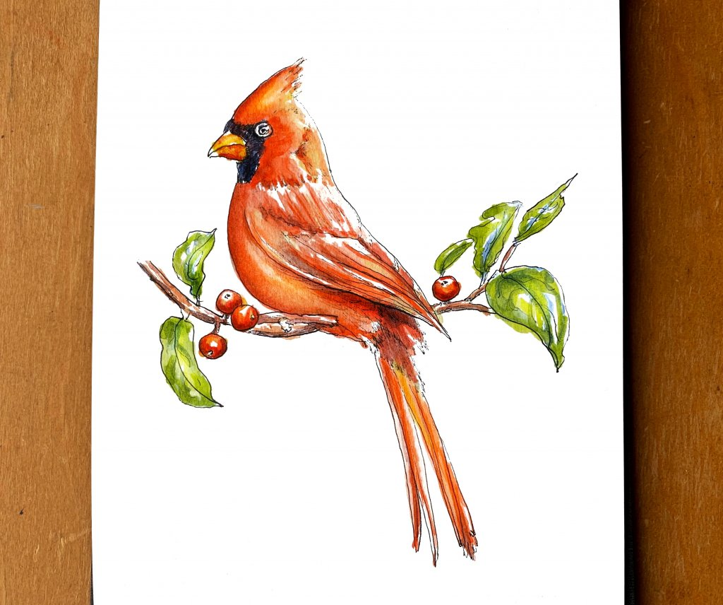 Day 8 - Cardinal Christmas Red Bird On Tree Branch - Doodlewash