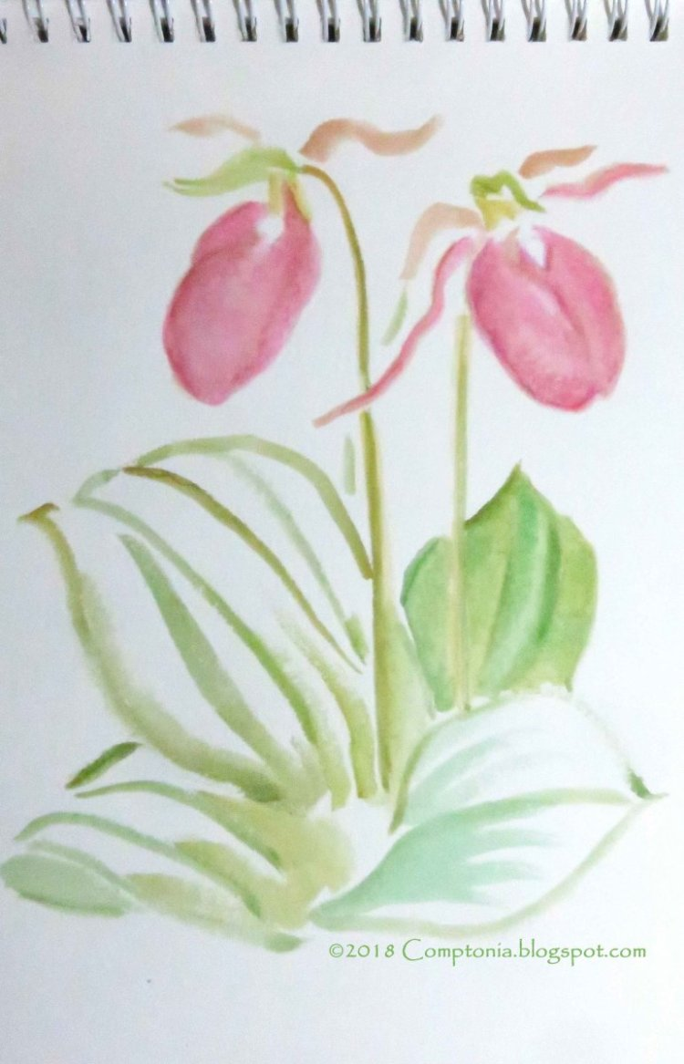 December is here and I suddenly felt like painting early summer – native orchid in nearby wood
