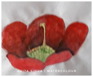 Flower painting practice – Camellia. #doodlewashJanuary2019 #anitasinhaastrologer 20190123_140