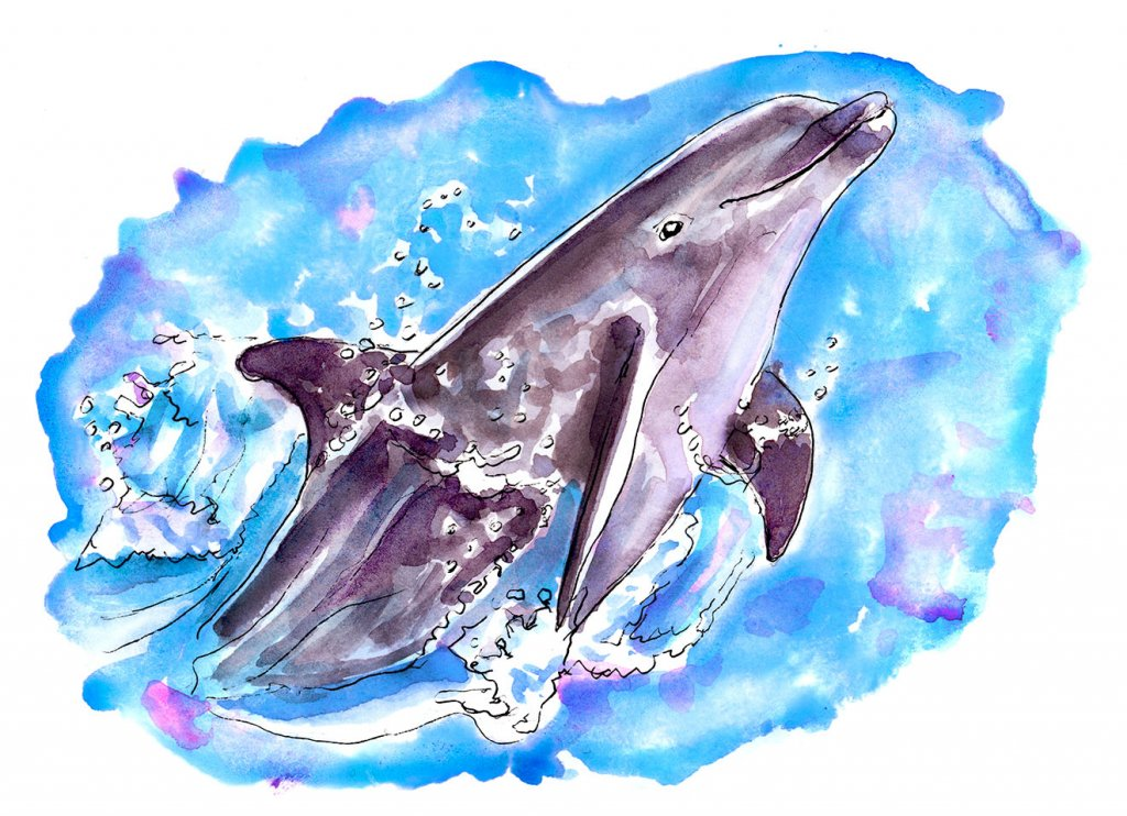 Day 10 - Play Like A Dolphin Watercolor - Doodlewash