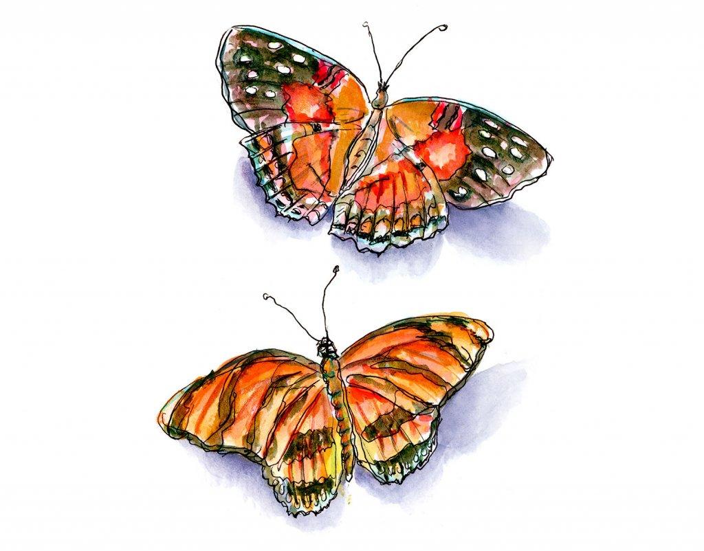 Day 30 - Butterflies Watercolor - Doodlewash