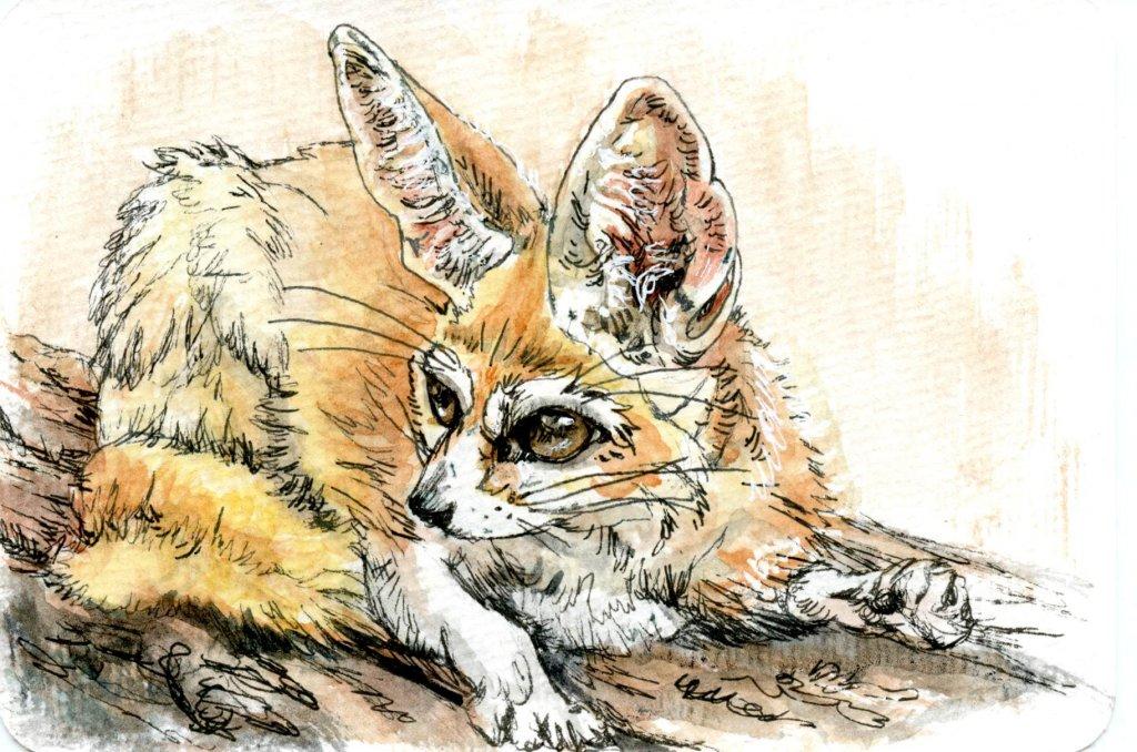 Prompt #dessert The Fennec Fox is a dessert … oh wait. That's 'desert' fox.