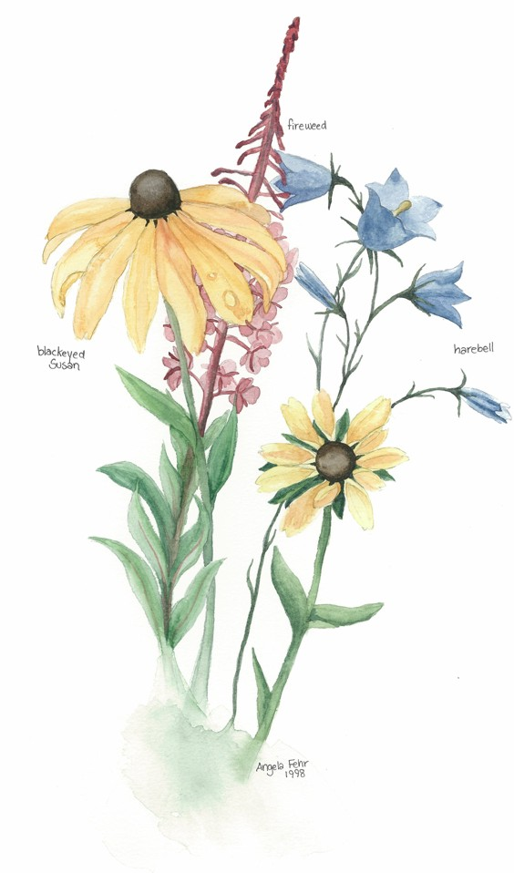 Angela Fehr Botanical Illustration Watercolor Painting