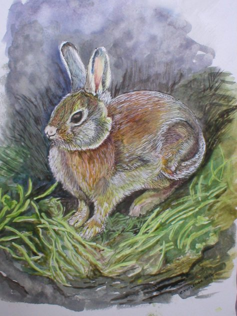 Grandchild's pet rabbit OLYMPUS DIGITAL CAMERA