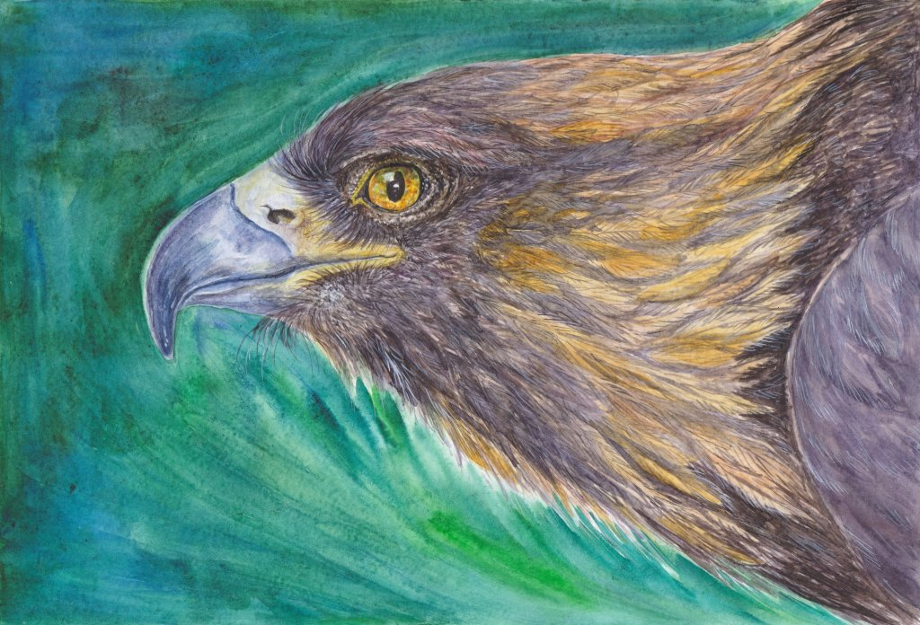 Eagle #watercolor 6noframe