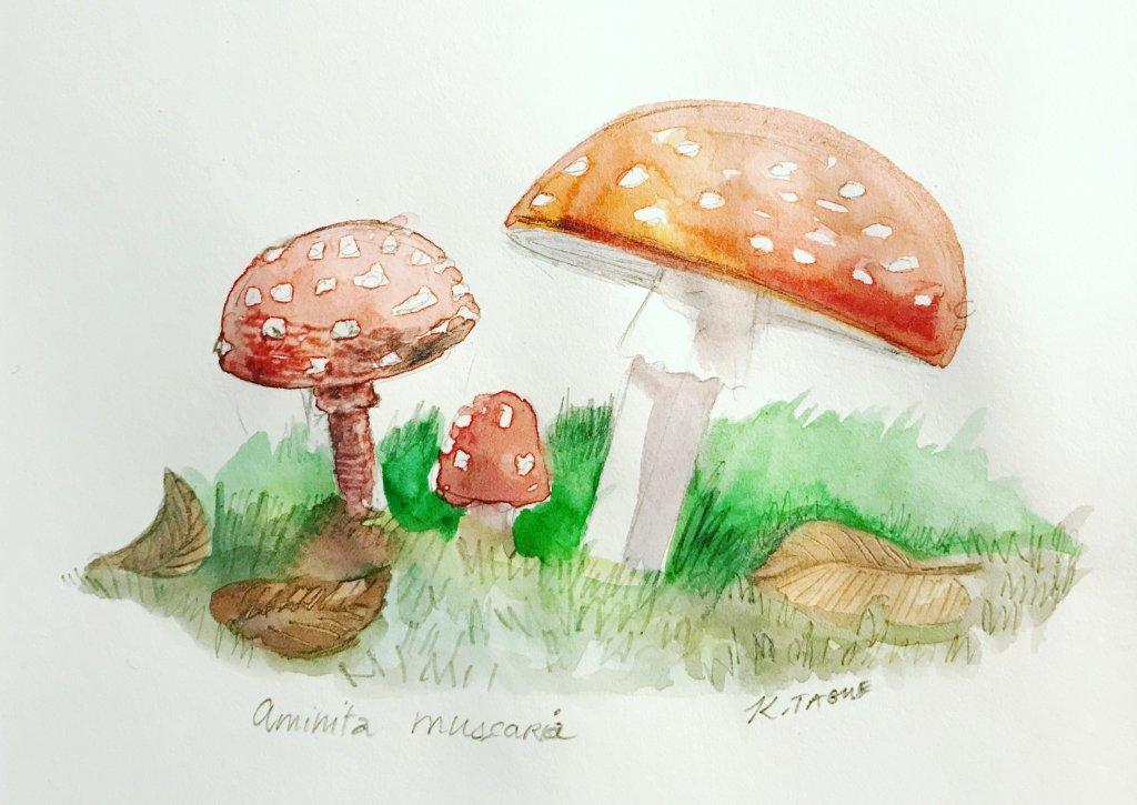 Mushroom for February doodlewash challenge #worldwatercolorgroup CD3566DD-4A57-4FF6-BDFB-A6B01936F18