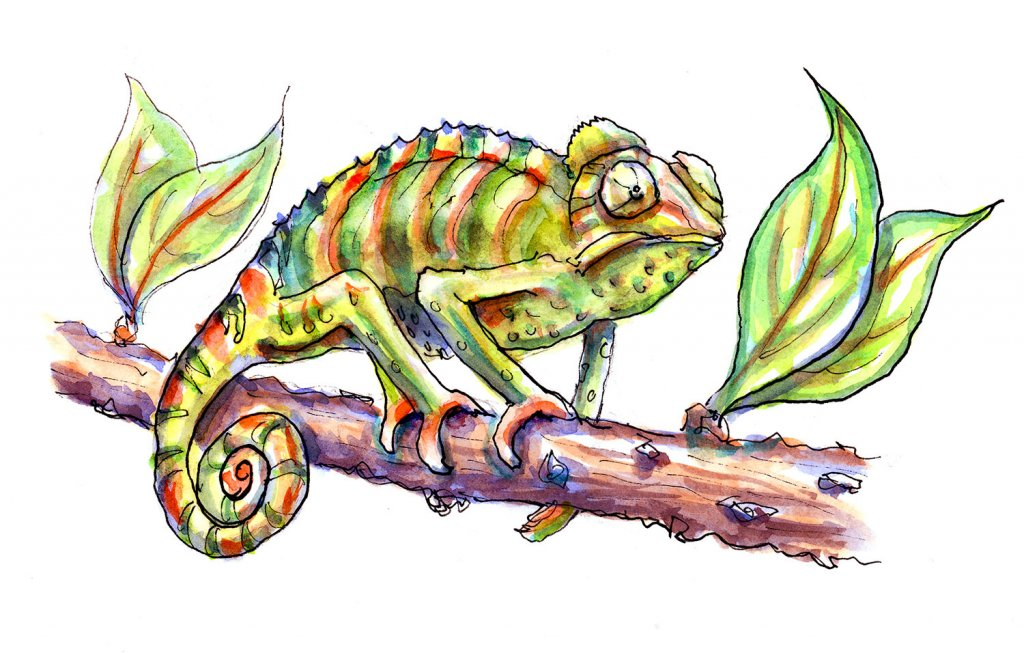 Day 11 - Chameleon Watercolor - Doodlewash