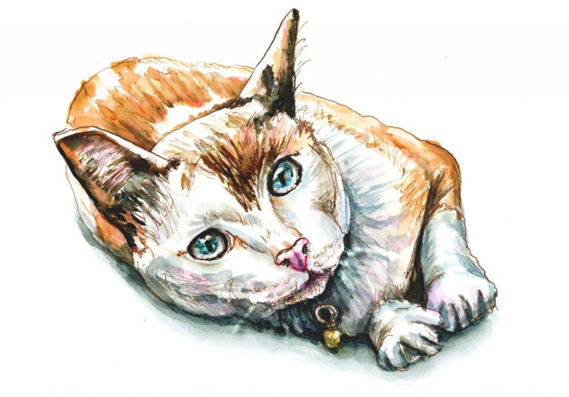 Day 12 - Cat Watercolor Resting - Doodlewash