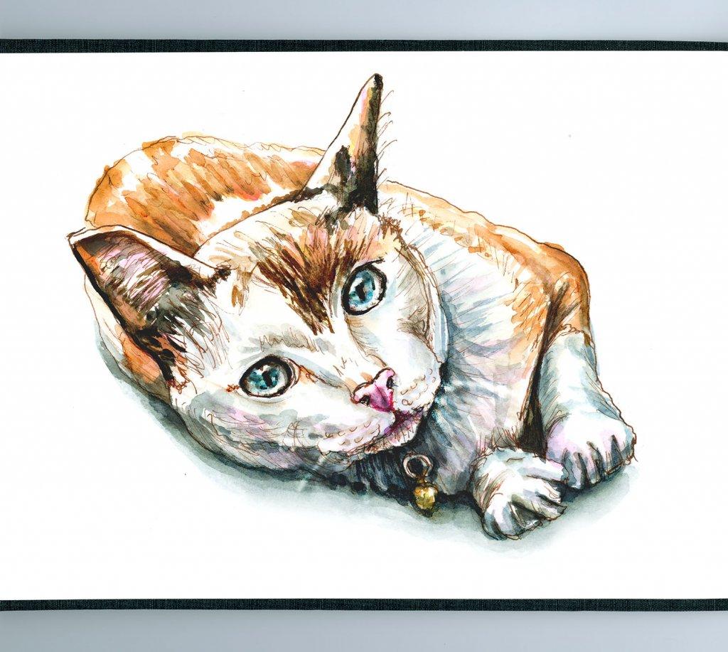Day 12 - Cat Watercolor Resting - Sketchbook Detail