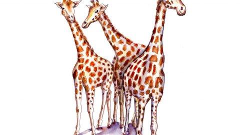 Day 16 - Three Giraffes Watercolor - Doodlewash