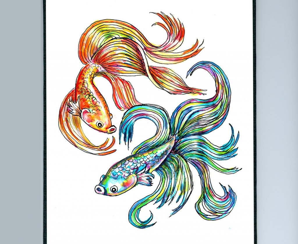 Day 17 - Siamese Fighting Fish Watercolor Drawing - Sketchbook