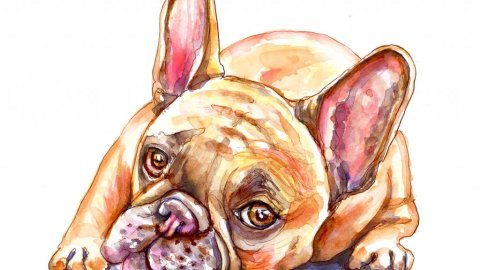 Day 20 - French Bulldog Watercolor - Doodlewash