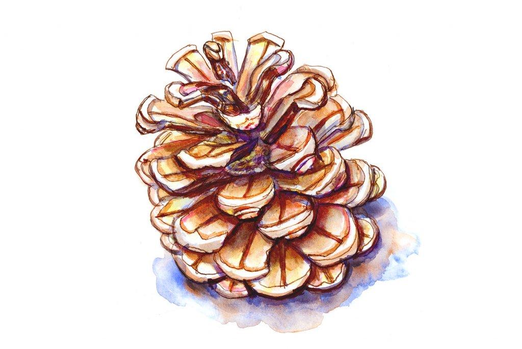 Day 21 - Pinecone Watercolor - Doodlewash